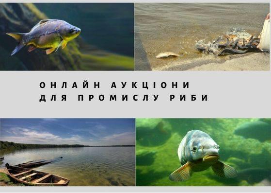 Отримати право на вилов та розведення риби можна буде на онлайн аукціоні через платформу ProZorro