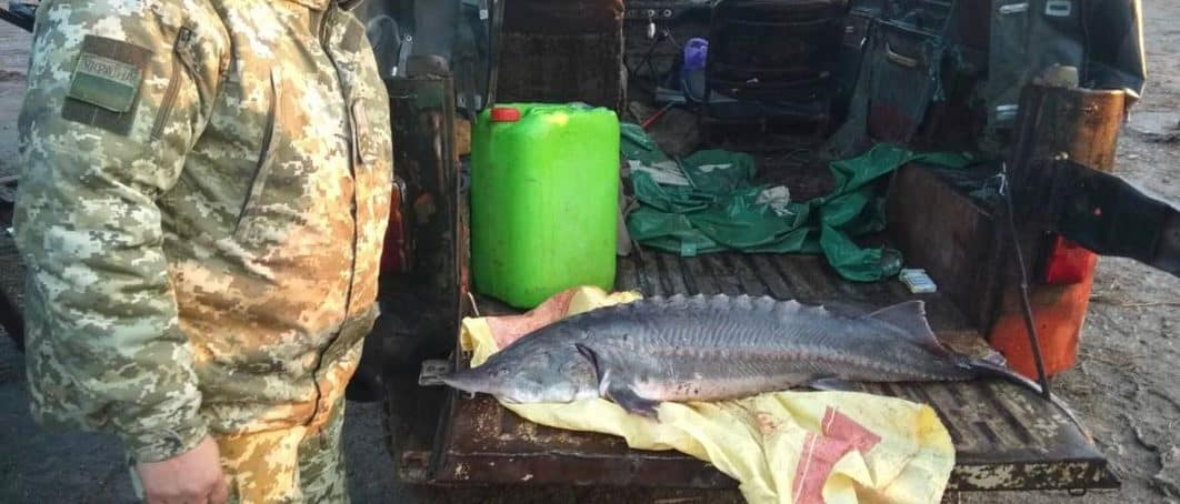 Прикордонники виявили браконьєрів з червонокнижним уловом на Миколаївщині