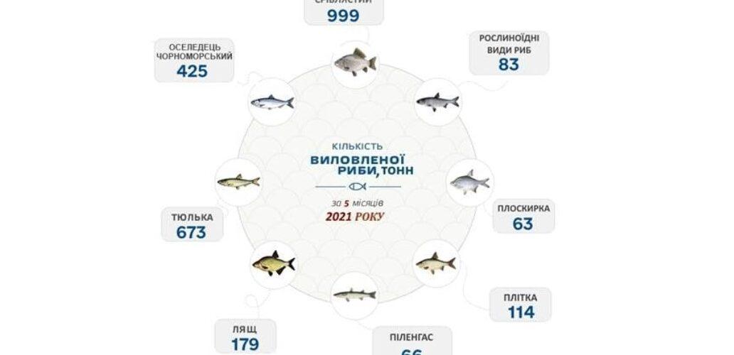 За 5 місяців промисловий вилов риби в Азовському морі збільшився на 42% – Держрибагенство