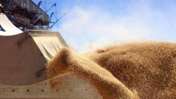 Експорт українського зерна у цьому сезоні скоротився на 22,7%