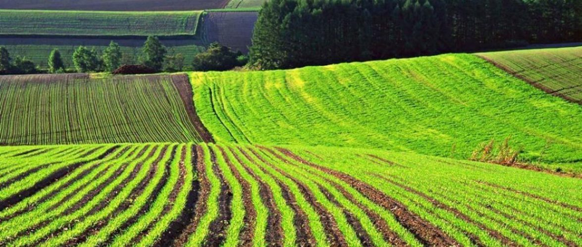 Викрито схему розкрадання 17 га особливо цінної землі